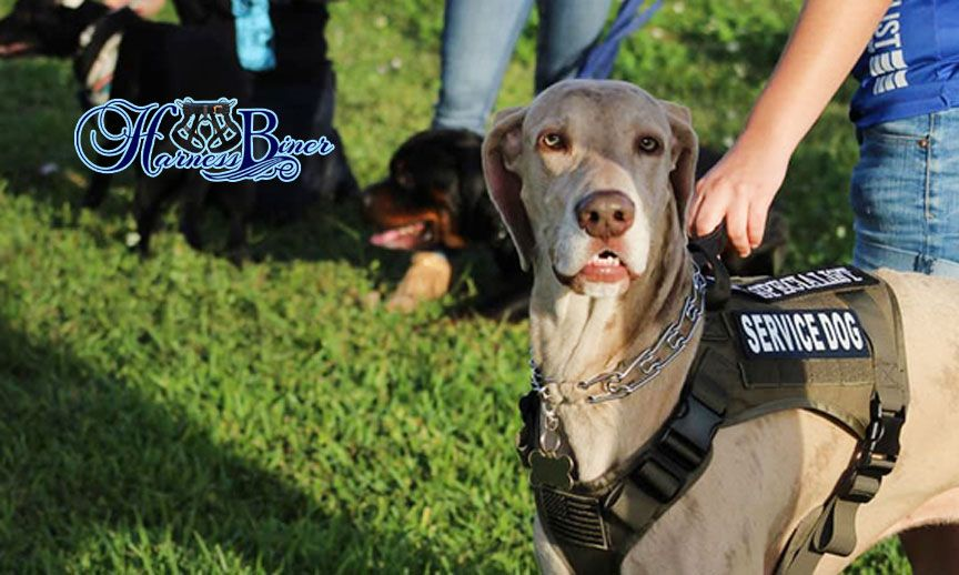 Services Dog Harness For Hiking Carting 038 Special Task Dog