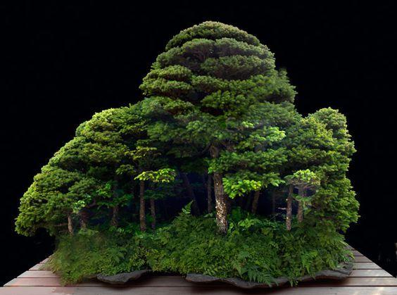 Saikei A Whole Little Forest Bonsai Pinterest Bonsai