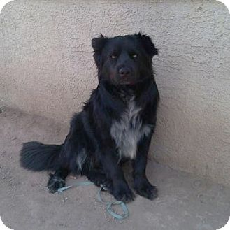 Nevada Bo Is A 3y O Chow Shepherd Mix Available For Adoption In Lasvegas I Love Kids Other Dogs Even Cats I M A Cuddle Bug With Images Pets Vet Visits Pet