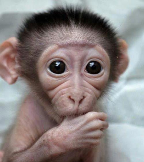 Resultado De Imagem Para Macaco Maquiado Animaizinhos