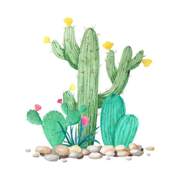 Check Out This Awesome Cactus Watercolor Desert Southwest Garden