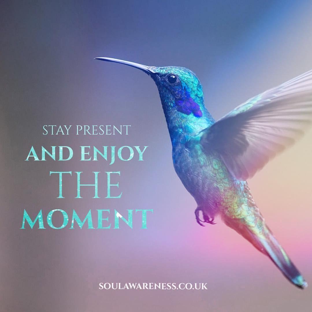 Message from a Hummingbird hummingbird spiritanimal