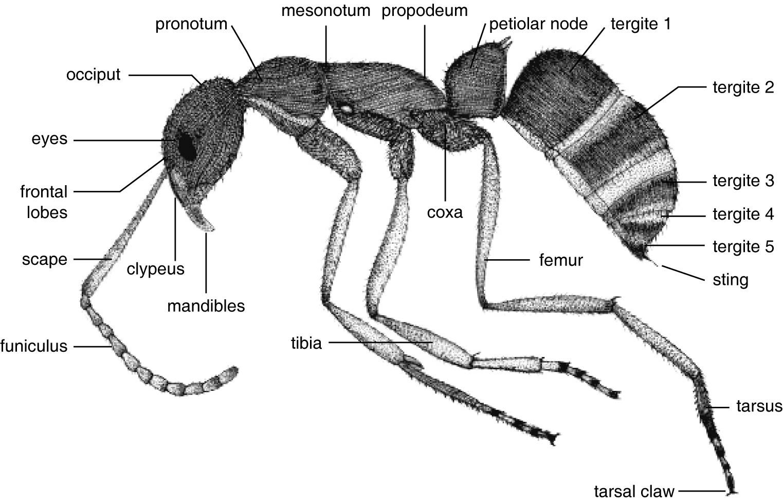 Pin By Christine Walsh On Natural History Morpholgy