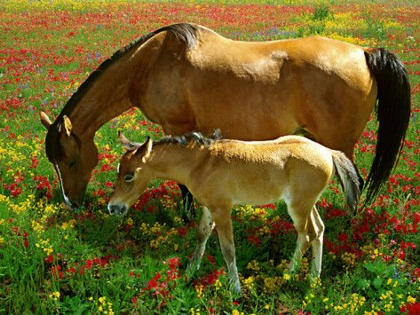 Horses and Foal Grazing