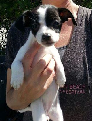 Volunteer Assaulted 2 Puppies Stolen At Petco Adoption Event Petco Puppies Adoption
