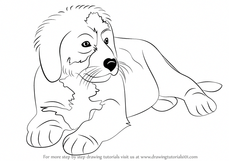 Learn How To Draw A Bernese Mountain Dog Other Animals Step By Step Drawing Tutorials Bern Burmese Mountain Dogs Bermese Mountain Dog Bernese Mountain Dog