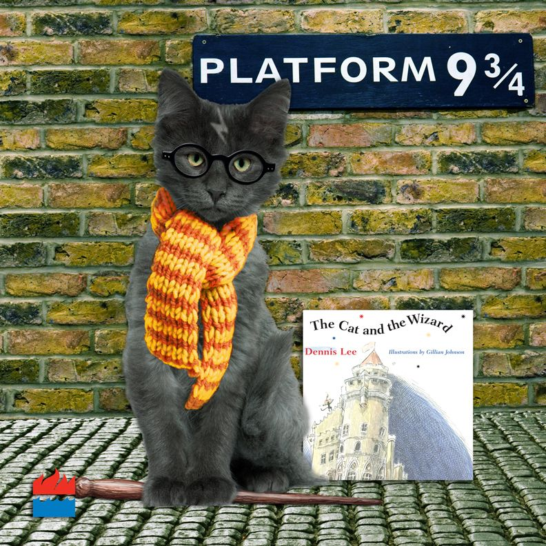 Harry Potter Cat! Can it possibly get any better than this??? ) & Harry Potter Cat! Can it possibly get any better than this ...