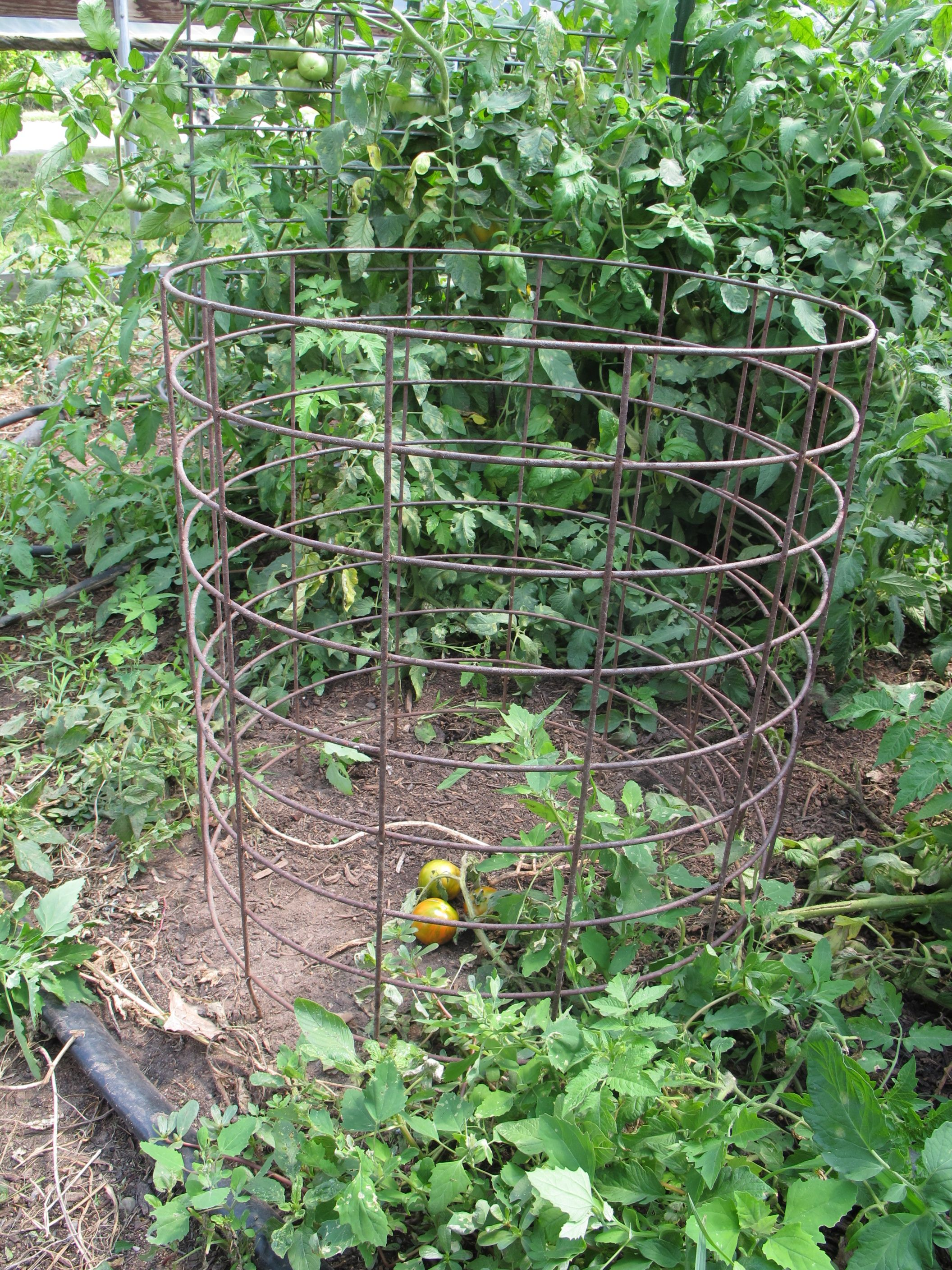 Tomato Cages Stakes Or Trellises Which Is Best For 400 x 300