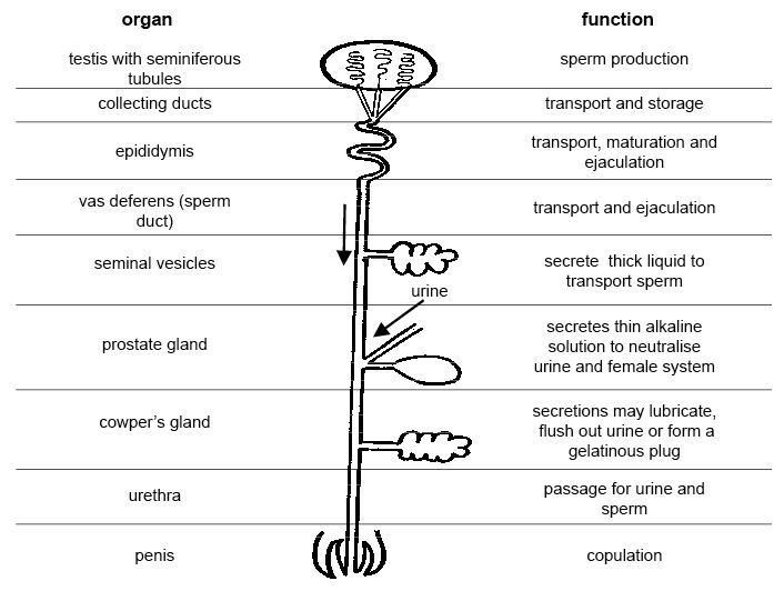 Anatomy and physiology of animals Diagram summarising the functions ...