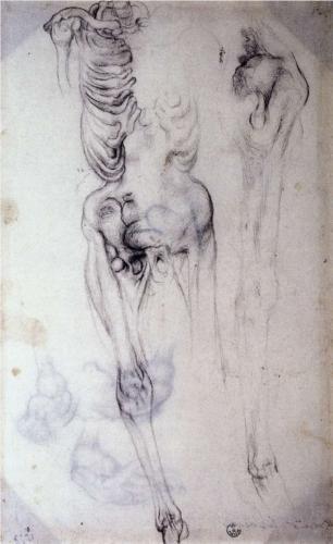 Anatomical study - Jacopo Pontormo