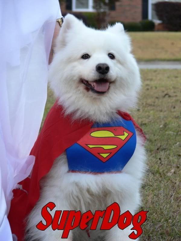 Superdog Coco Samoyed Dog Costume Pet Halloween Costumes Dog
