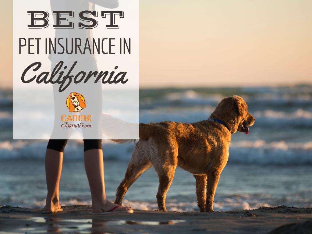 Best Pet Insurance In California Find The Best Plan