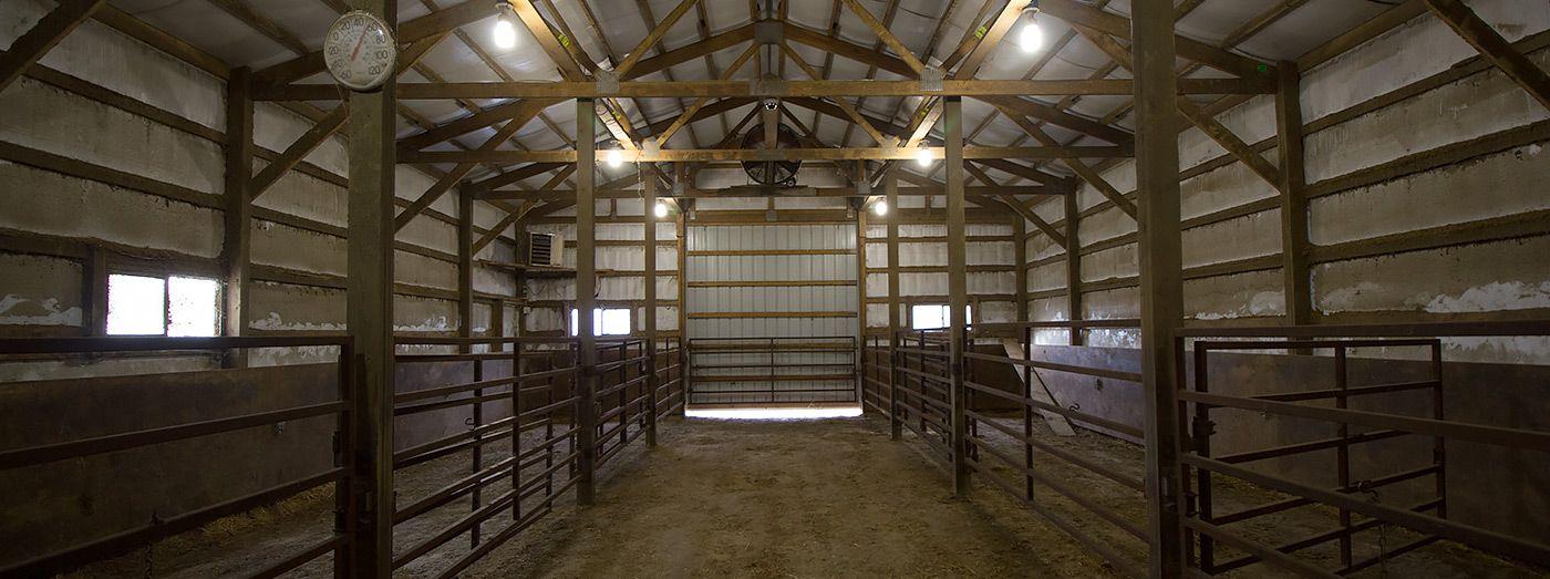Calving Barn Cameras Barn Calves Room