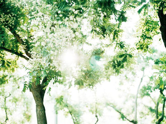 Takahiro Motonami 本浪隆弘   PHOTOGRAPHER