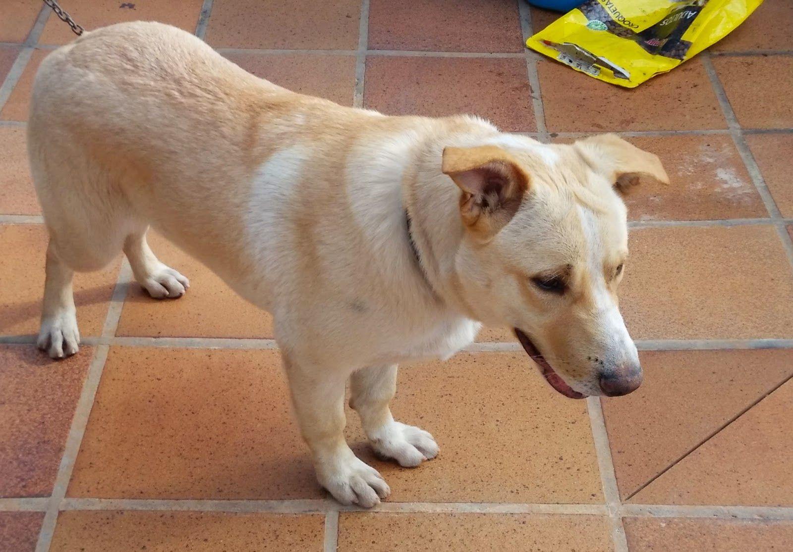 Perduts: PERRO encontrado en ONDA (Castellon)