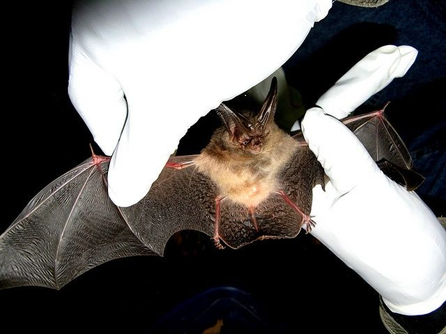 How To Get Rid Of Bats In Your Attic The Ultimate Repellent Attic Doors Attic Attic Remodel