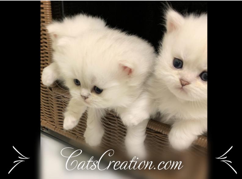 Pin On Catscreation