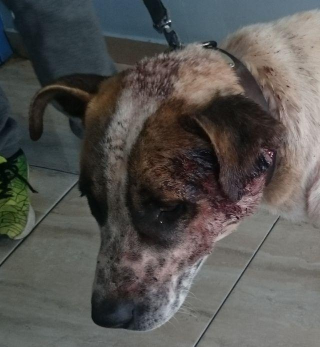 26032017rude15 Tiere Suchen Ein Zuhause Hund Gesucht Tiere Retten