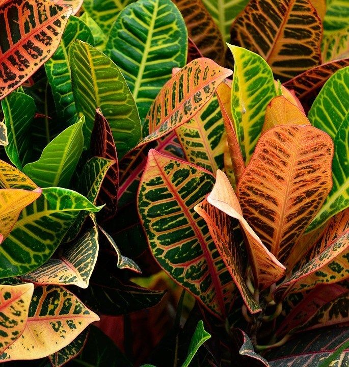 Colorful Indoor Plants -   17 indoor plants Background ideas