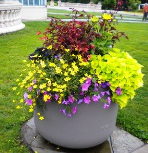 17 Best 1000 images about Container gardenshanging baskets on