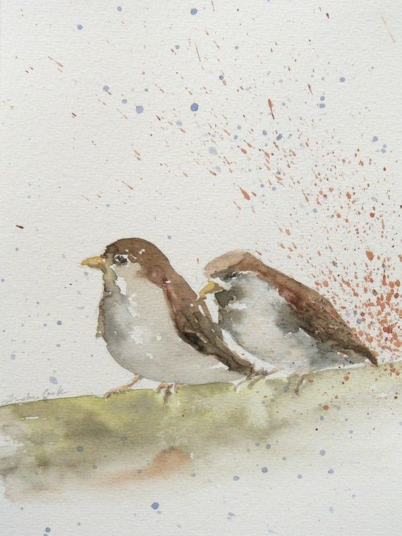 Art Demo How To Paint A Robin In Watercolour Watercolor Birds