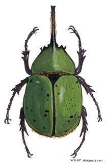 Hercules Beetle Illustration. $20.00, via Etsy.
