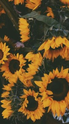 Sunflowers Tumblr