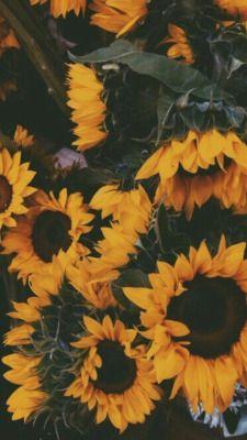 Sunflower Tumblr Background : sunflower, tumblr, background, Vintage, Sunflower, Wallpaper, Tumblr