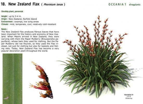 XfrogPlants New Zealand Flax ( Phormium tenax )