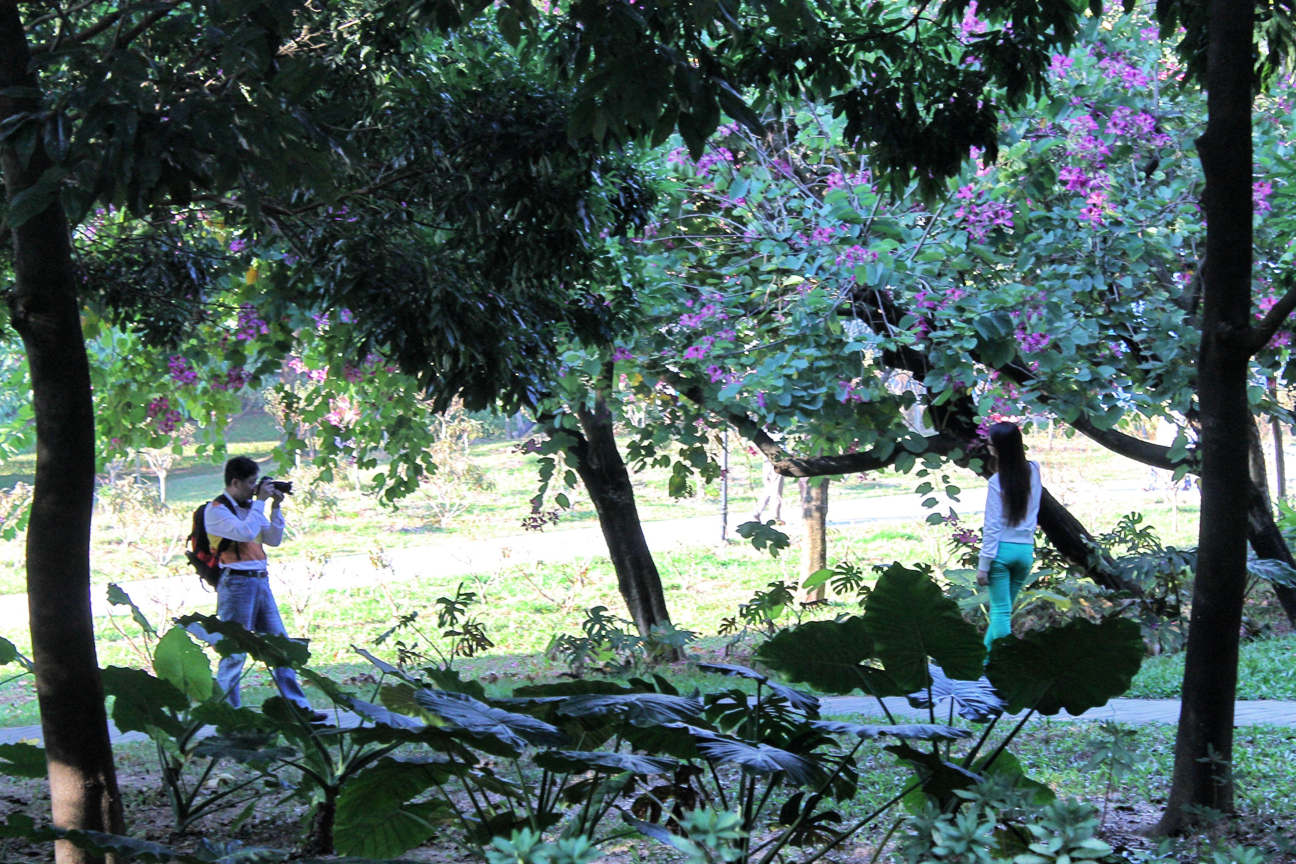 Shenzhen lotus park. Capturing the summer trees.