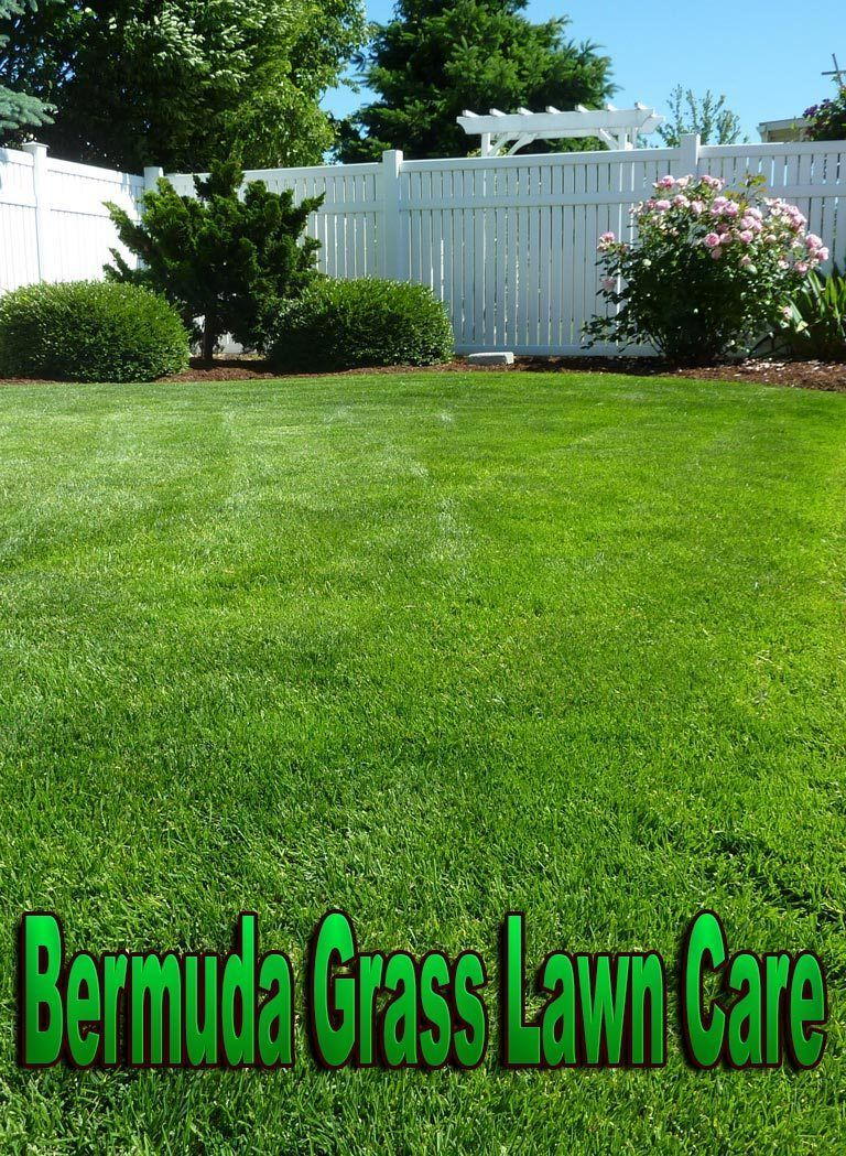 Bermuda Gr Lawn Care Is A Low To The Ground Growing Extra Tough Variant Of Offering Wonderful Cover For As Well