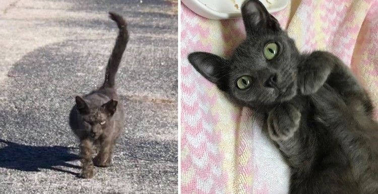 Scraggly Kitten Walks Up To Rescuer And Meows For Help When She Finally Finds Kindness Love Meow Kittens Baby Cats Kitten Meowing