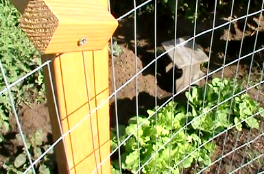 Portable Chicken Fence Posts To Keep Those GD Chickens Out Of The Garden.