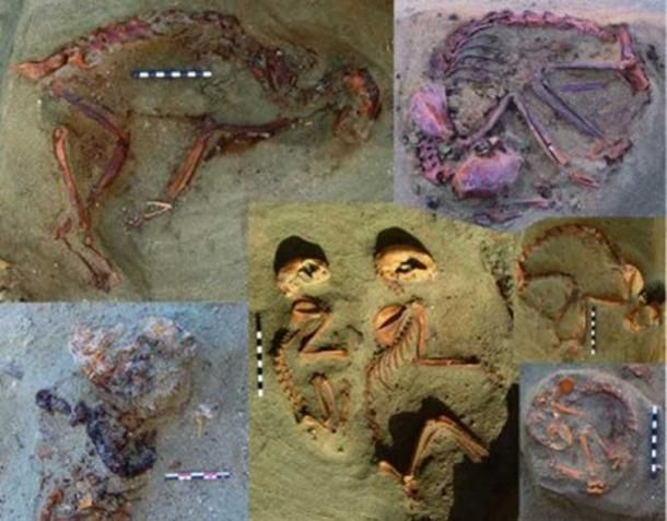 Portada - Fotografías de algunas de las tumbas de gatos descubiertas recientemente en el antiguo cementerio de Berenike (Egipto). (Marta Osypińska)