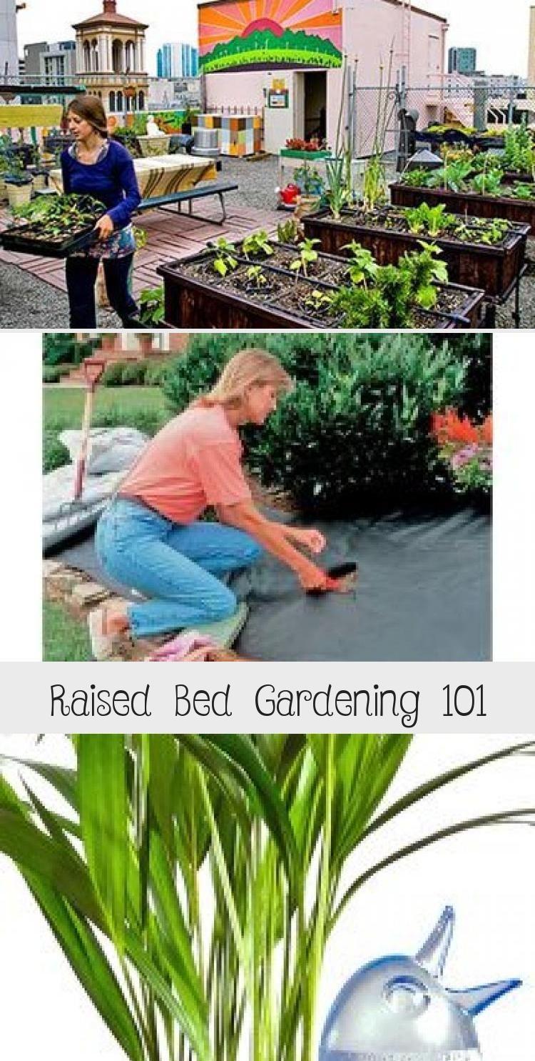 Raised Bed Gardening 101 Garden In 2020 Raised Garden Beds