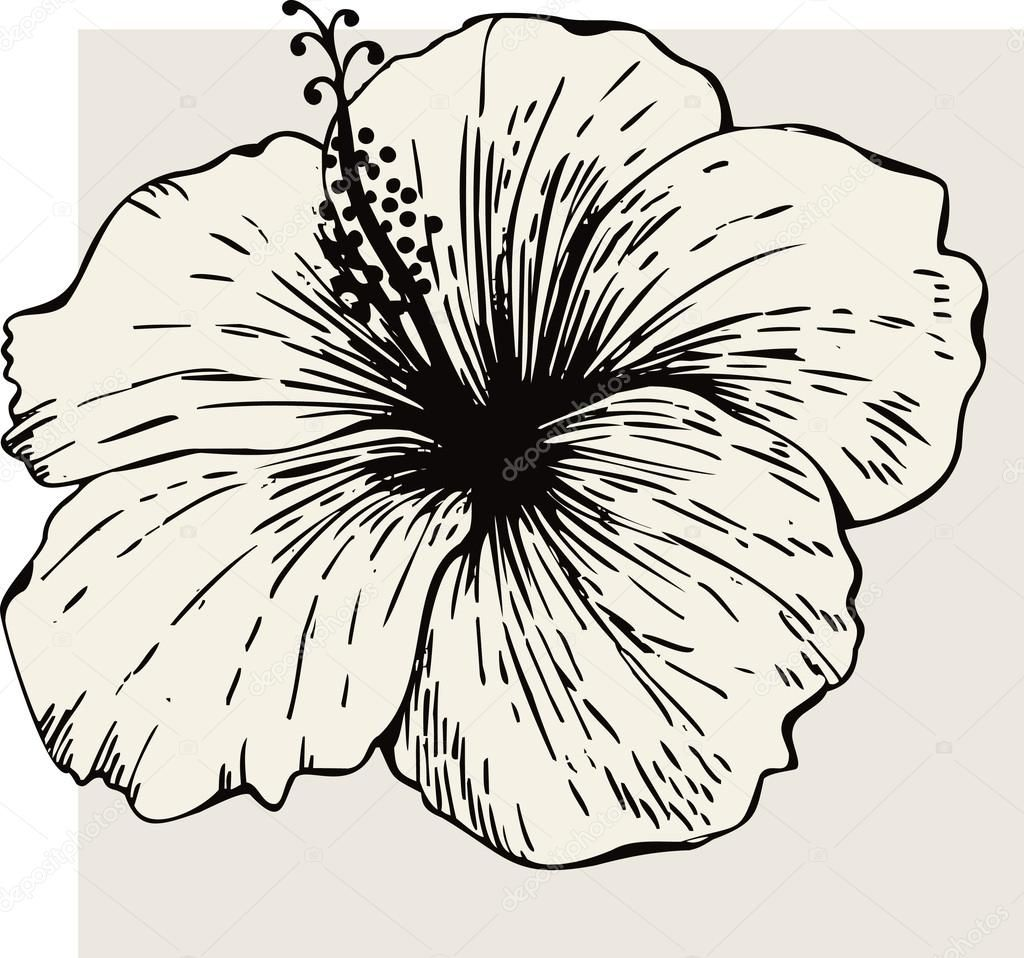 Download hibiscus flower stock illustration 6608756 hibiscus download hibiscus flower stock illustration 6608756 izmirmasajfo