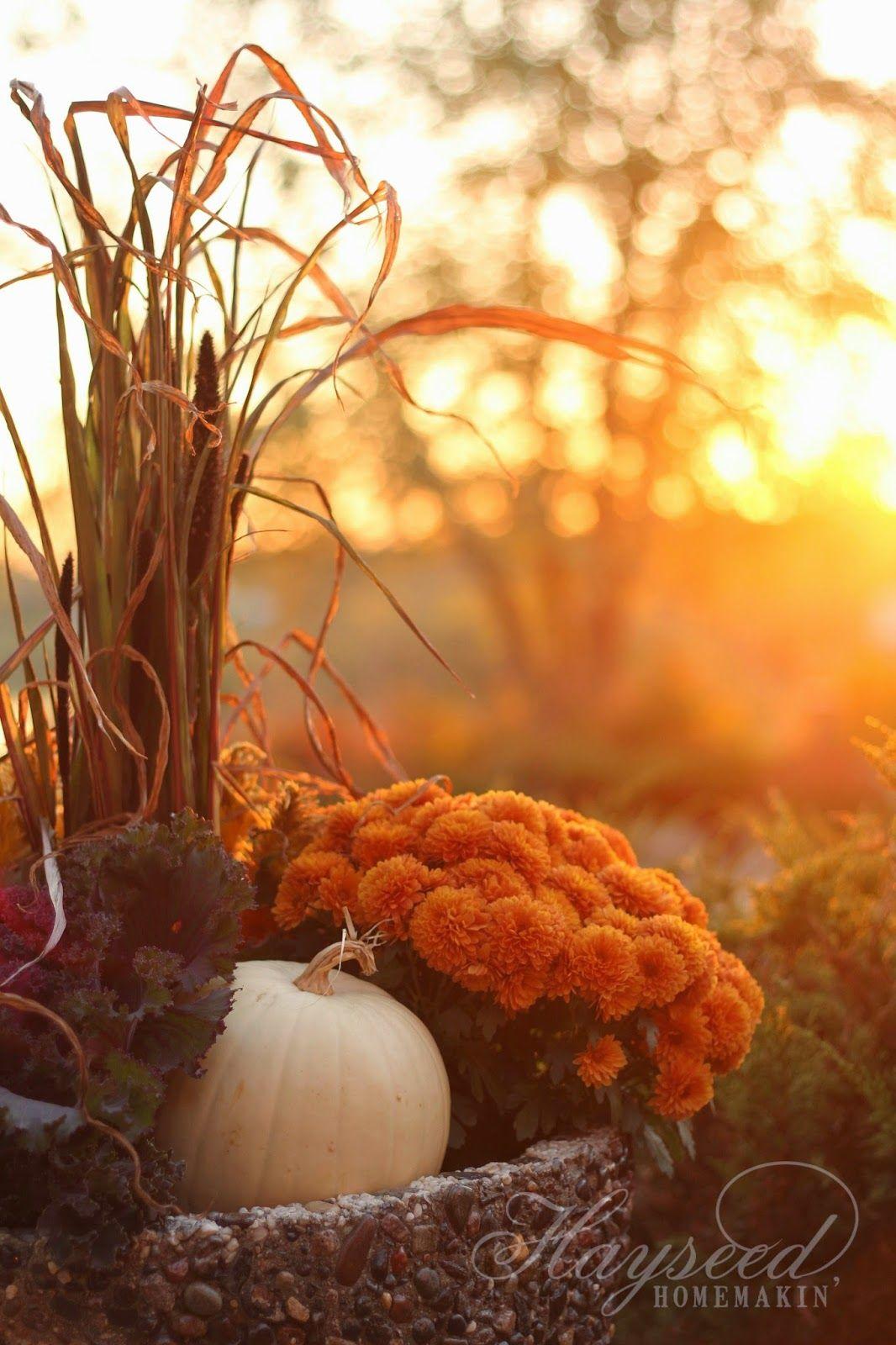 Hayseed Homemakin': Fall >> Porch Planting
