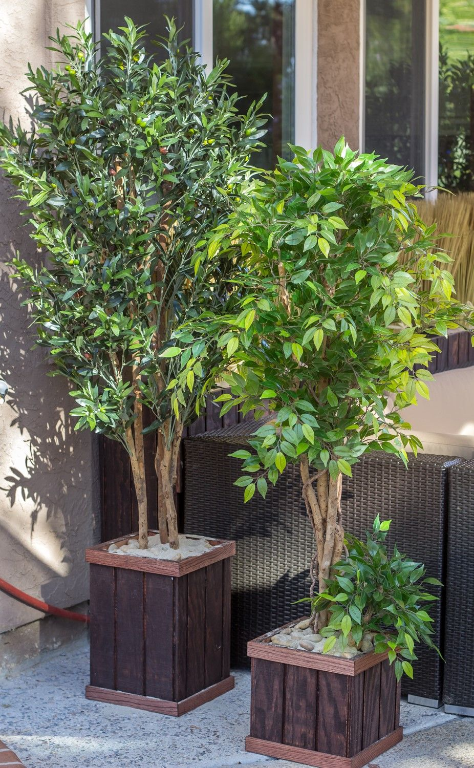 Amazing artificial ficus and o boy olive trees really fake faux