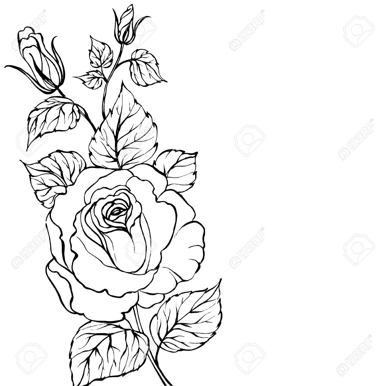 Traditional Flower Line Drawing : Rose tattoos outline google search tattoo pinterest