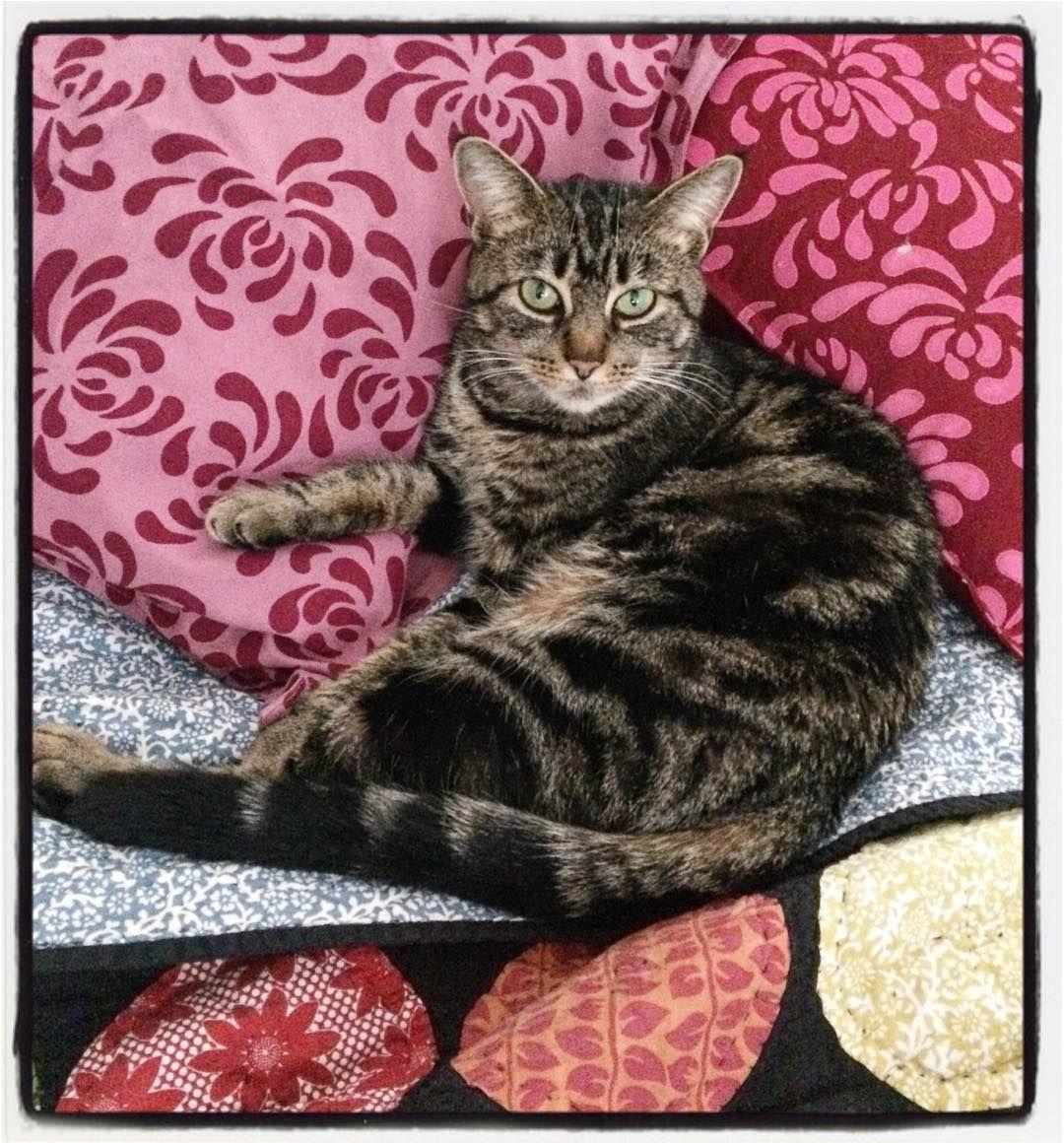 Minnie Minerva. #catsofinstagram
