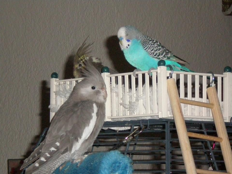 baxter in front, becker in back, and blue the parakeet