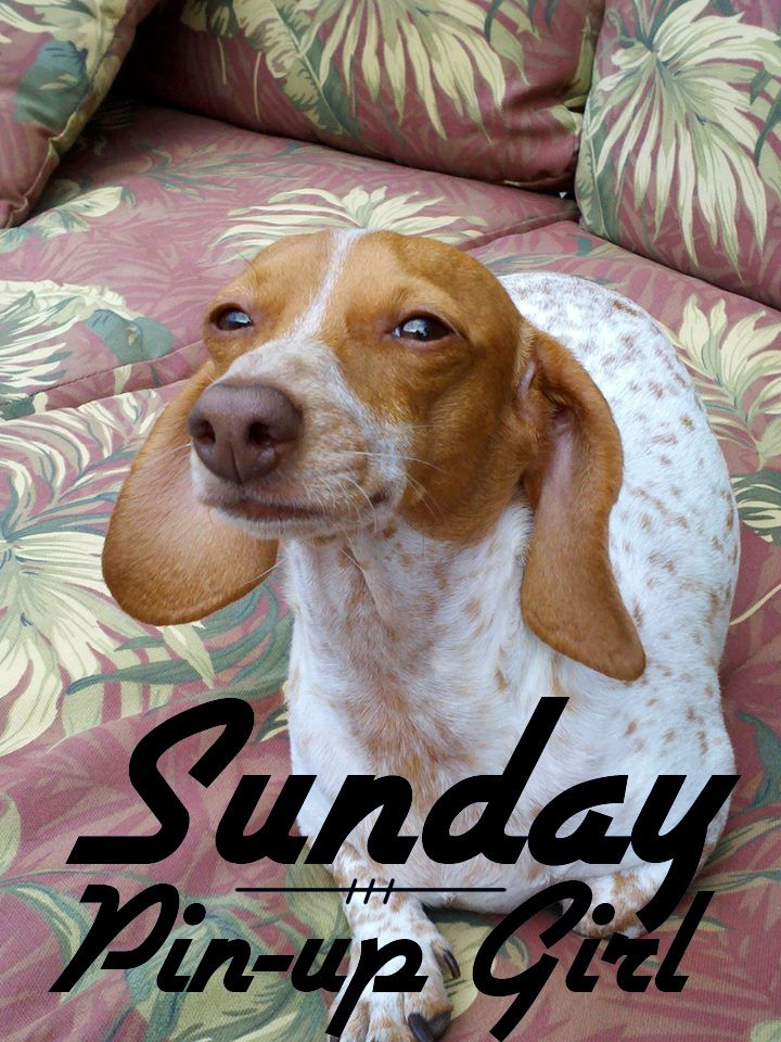 Today\'s Sunday Pin-Up Girl is Lily from Orlando, Florida. | Pets ...
