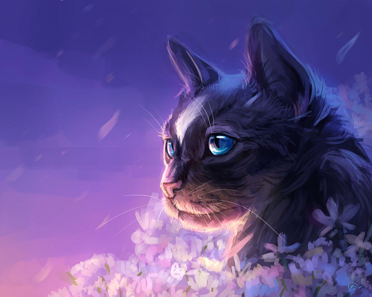 Bilder Von Katze Schnauze Tiere Blick Gezeichnet Starren Ani