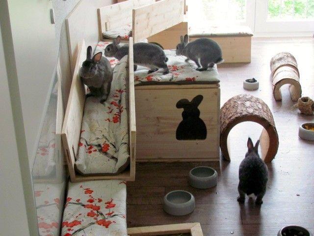 Innenhaltung Fotos Kaninchenhaltung Hasenstall Kaninchen
