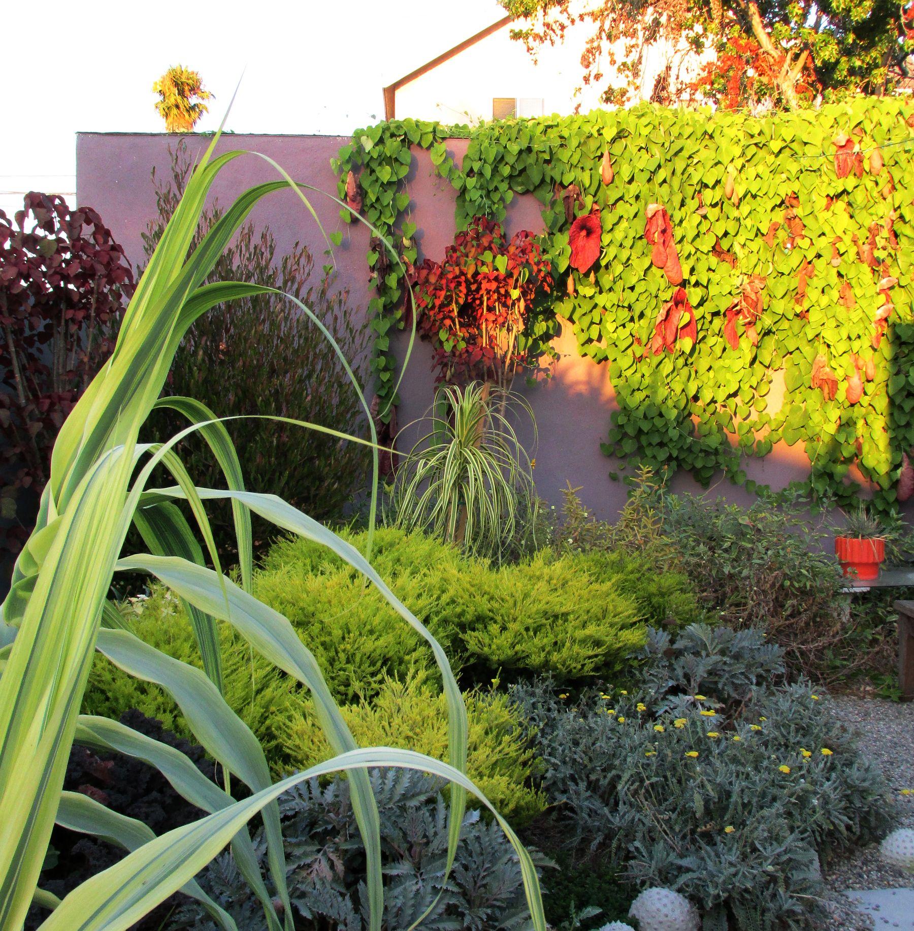 Color study; Dusk and Dustin Gimbel\'s Long Beach garden | Pure ...