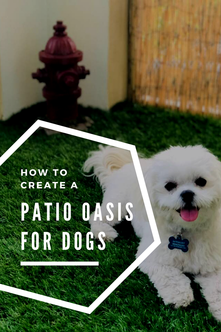 Creating A Dog Friendly Patio Balcony For Dogs Dog Spaces Dog Potty Area