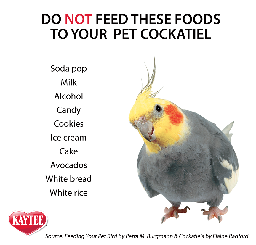 Do Not Feed These Foods To Your Pet Cockatiel Keep Them Happy And Safe By Avoiding These Among Other Foods Always Check Wi Cockatiel Cockatiel Care Pet Birds