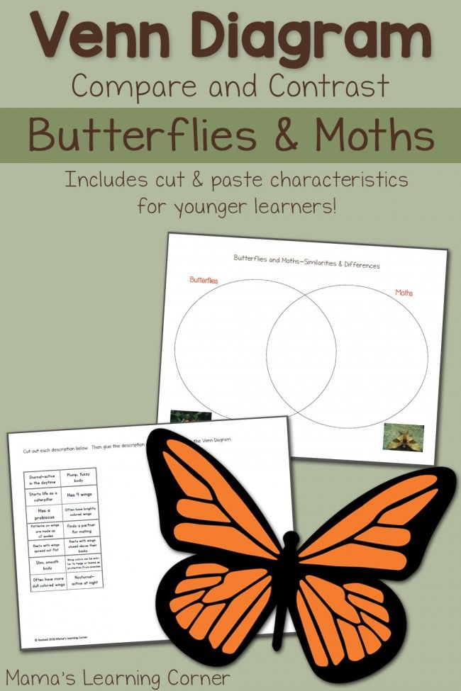 Moths and Butterflies Venn Diagram Worksheet | Insects Unit Study ...