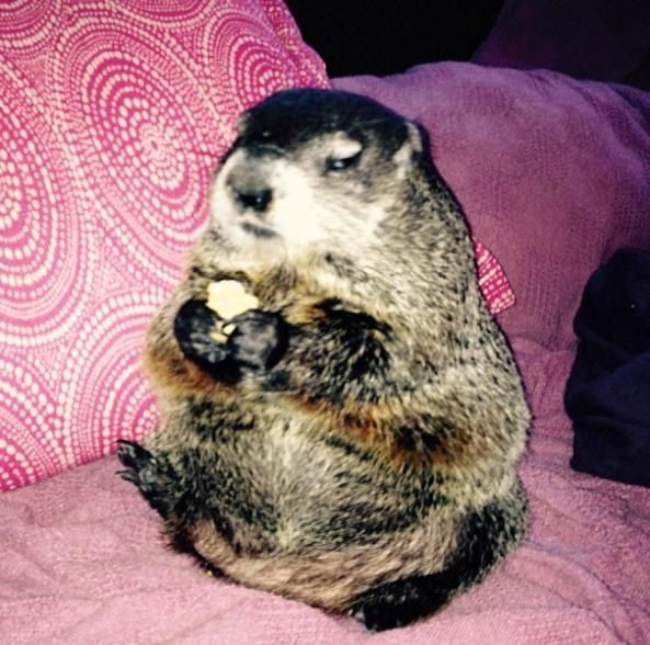 When Coco the blind woodchuck was injured, she laid in a family's backyard for three days before they finally realized she was still alive. Now she lives inside