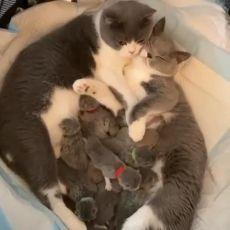 кошки и все все все....